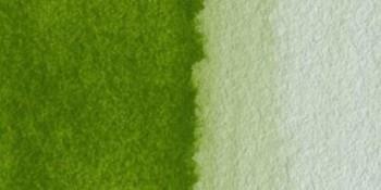 N.525 Verde oliva amarillento - ACUA. S. HORADAM S2